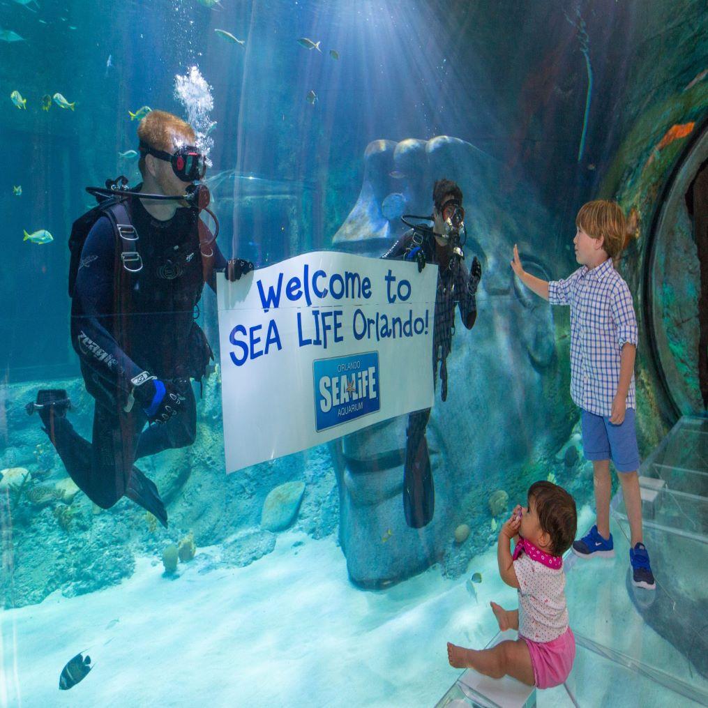 SEA LIFE Orlando Aquarium | OrlandoHoppers.com